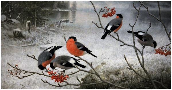 Στη Φινλανδία, ο χειμώνας είναι τόσο ζεστός που τα πουλιά παύουν να μεταναστεύουν