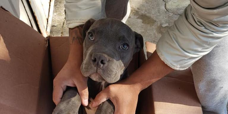12χρονος άφησε τον σκύλο του σε καταφύγιο για να τον σώσει από τα χέρια του βίαιου πατέρα του