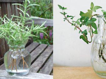 12 φυτά που δεν χρειάζονται καθόλου χώμα και μπορείτε να τα μεγαλώσετε απλά μέσα σε νερό