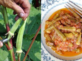 Μπάμιες: Το πολύτιμο λαχανικό που απορρίπτουμε, χωρίς να γνωρίζουμε τις ευεργετικές του ιδιότητες