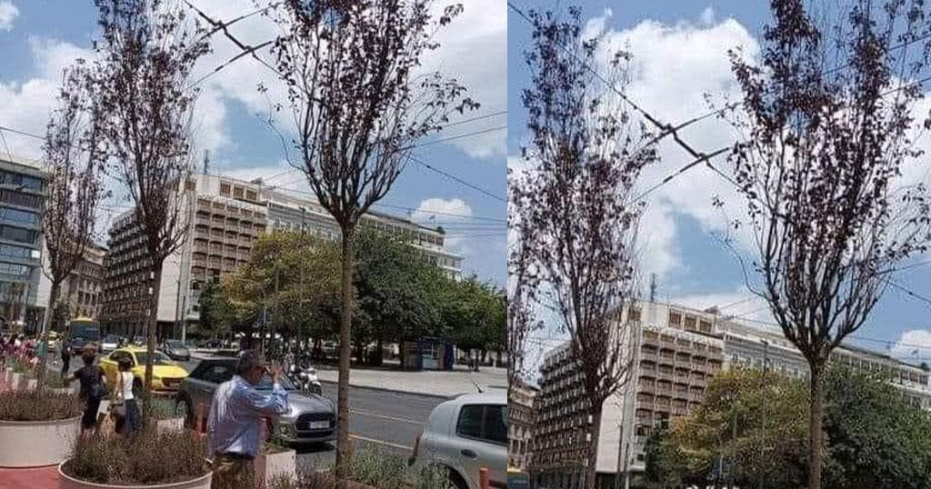 Αθήνα: Τα δέντρα στον Μεγάλο Περίπατο ξεράθηκαν κιόλας