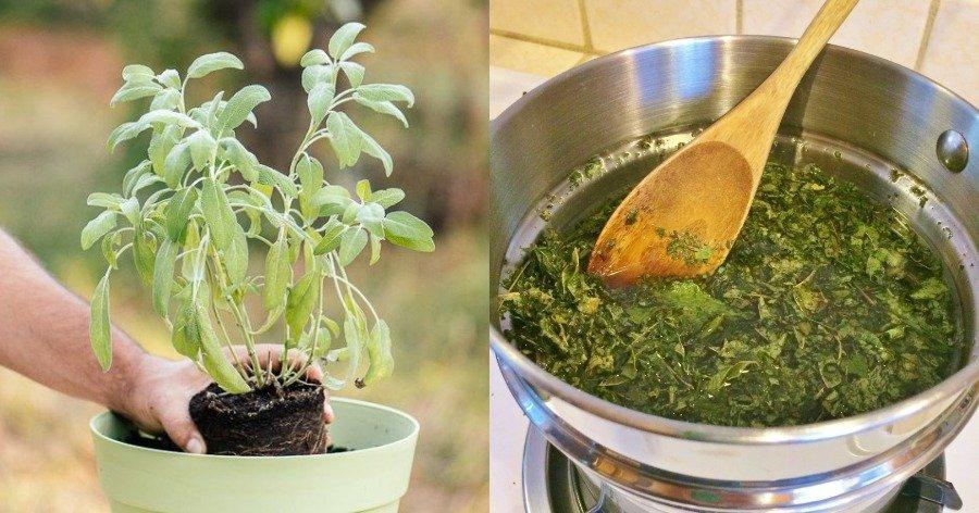 Φαρμακείο της φύσης: 40 βότανα και θεραπευτικά φυτά και σε ποιες παθήσεις κάνει καλό το καθένα